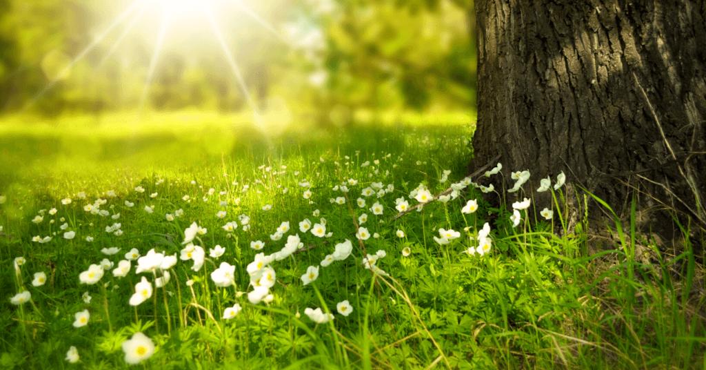 Frühling Holz Element